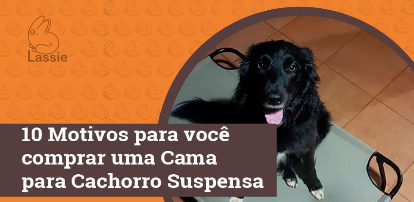 10 Motivos para você comprar uma Cama para Cachorro Suspensa