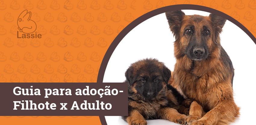 Guia para adoção - Filhote x Adulto