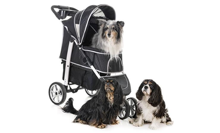 Carrinho de bebê para passear junto com os cães