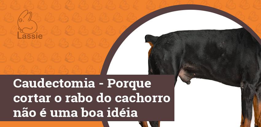 Caudectomia - Porque cortar o rabo do cachorro não é uma boa idéia