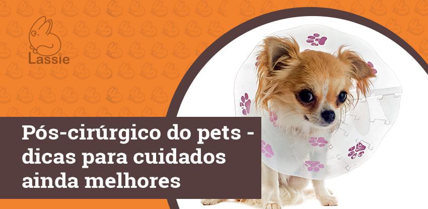 Pós-cirúrgico dos pets - dicas para cuidados ainda melhores