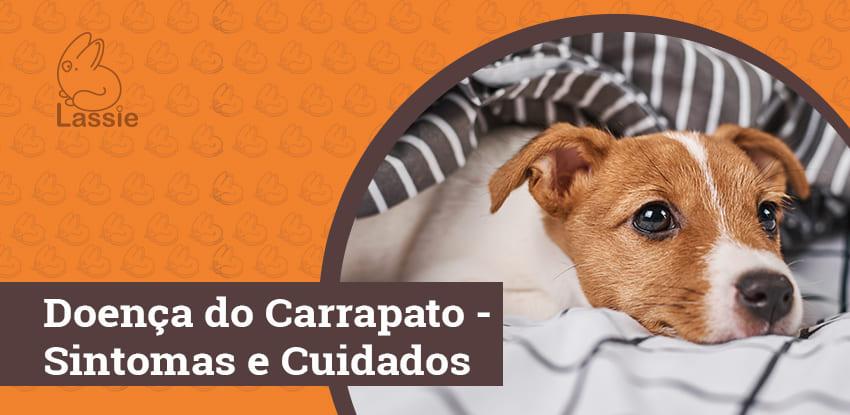 Doença do Carrapato - Sintomas e Cuidados