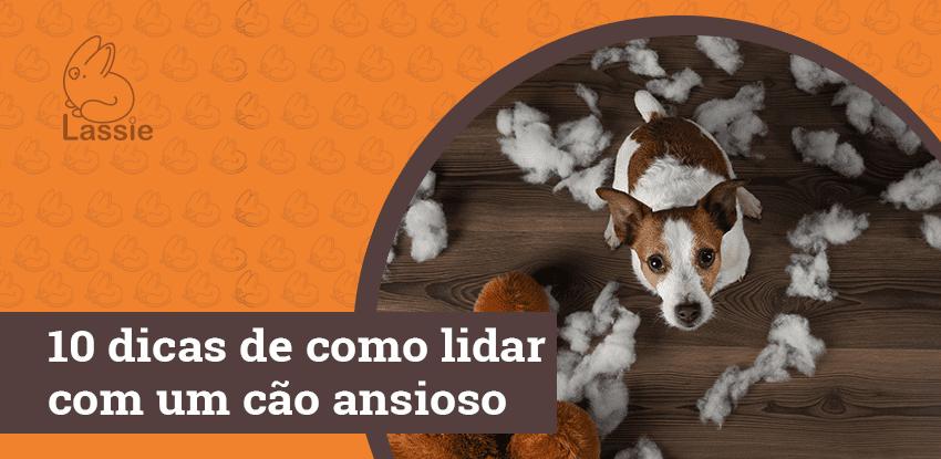 10 dicas de como lidar com um cão ansioso