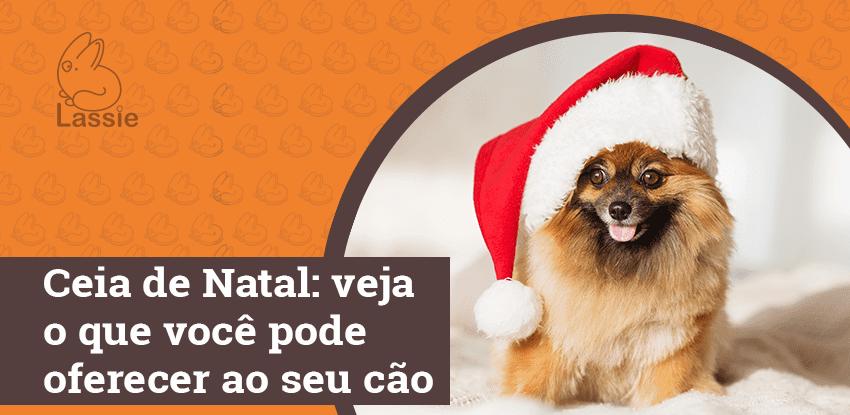 Ceia de Natal: veja o que você pode oferecer ao seu cão