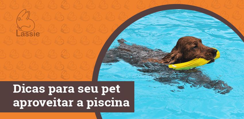 Dicas para seu pet aproveitar a piscina