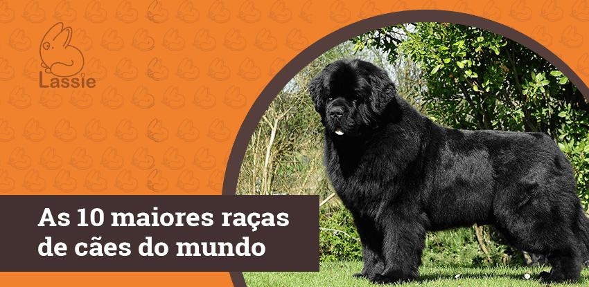 As 10 maiores raças de cães