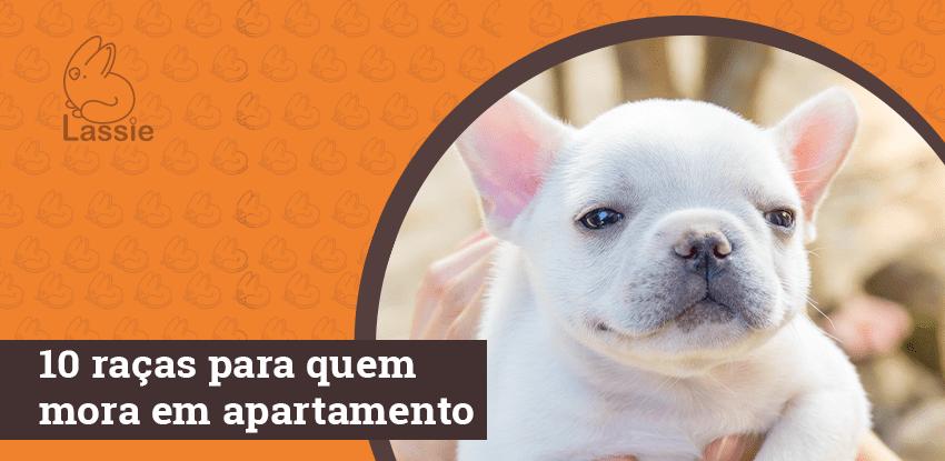 10 cachorros ideais para quem mora em apartamento