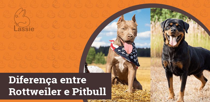 Diferença entre Rottweiler e Pit Bull Terrier Americano