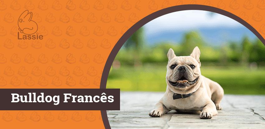 Bulldog Francês