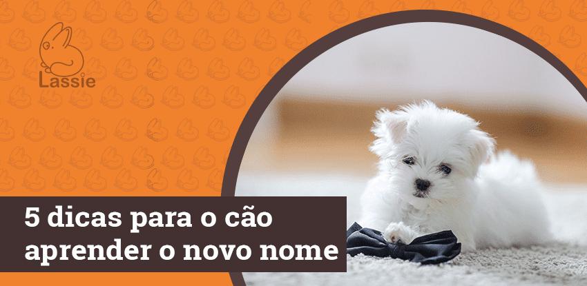 5 dicas para o cão aprender o novo nome