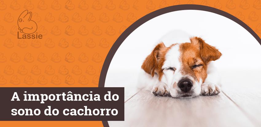 A importância do sono do cachorro