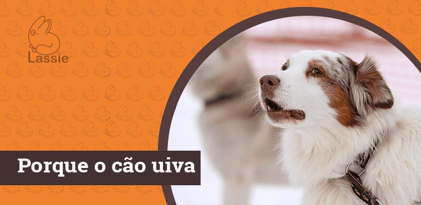 Por que o cão uiva?
