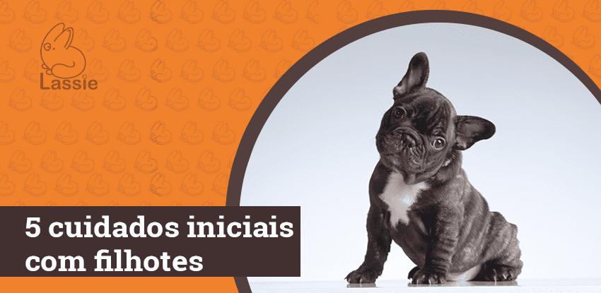 5 cuidados iniciais com filhotes de cães
