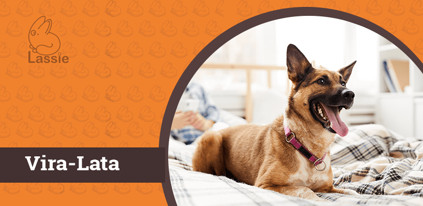 Adote um Vira-Lata: cachorro sem raça definida