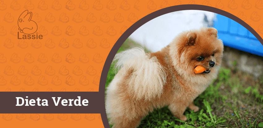 Saiba tudo sobre a Dieta Verde para cães
